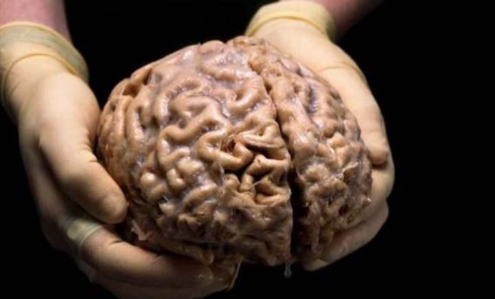 мозг постоянно развивается