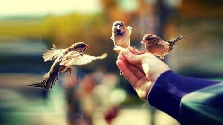 миролюбие и доброта