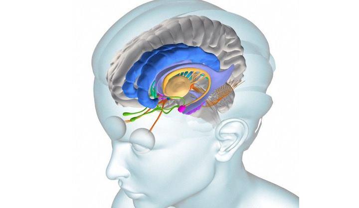 откуда появляется особенность восприятия нашего зрения