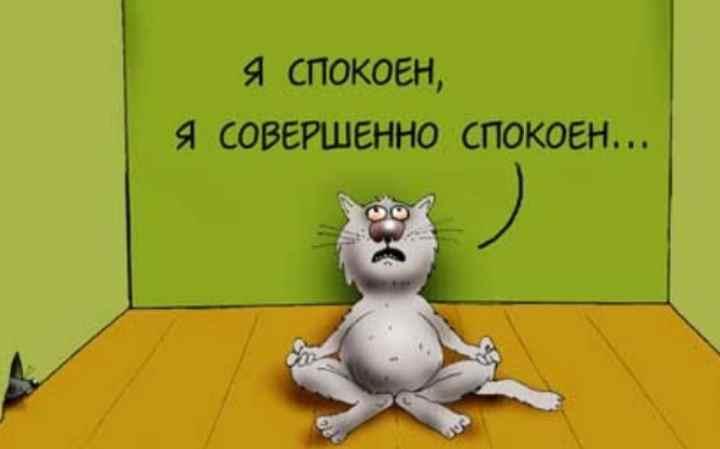 Медитация кота