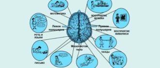 упражнения для развития и укрепления памяти рекомендованы для всех людей без исключения