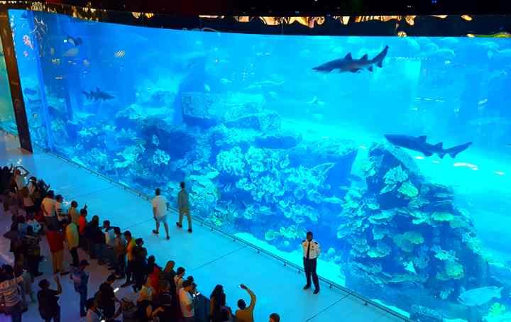 В аквариуме обитает более 33000 рыб и морских животных
