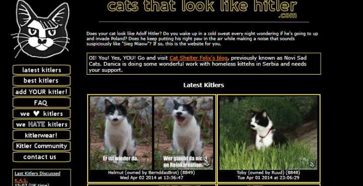 На котиков любят посмотреть