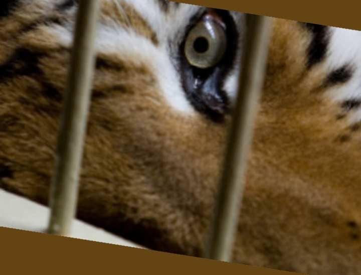 В зоопарках, на самом деле, дела обстоят не сильно лучше