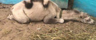 Случаев ужасного обращения с животными в СМИ можно найти довольно много