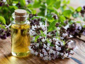 У душицы есть полезные свойства, которые объясняются химическим составом растения