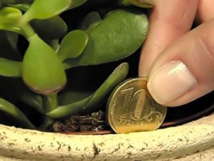 Приметы, сулящие богатство и успех – улучшаем финансовое благополучие